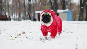 Śliczny mops w Święty Mikołaj kostiumu pozycji w śniegu w zima parku boże narodzenie nowy rok szczęśliwy wesoło zbiory wideo