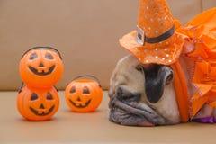 Śliczny mopsa pies z kostiumem szczęśliwy Halloween dnia sen na kanapie z plastikową banią obraz royalty free