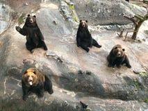 Śliczny Niedźwiadkowy zespół przy niedźwiadkowym parkiem obraz stock