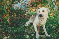 Śliczny nieszczęśliwy psa spęczenie, osamotniony, przybłąkany pies, zdjęcia royalty free