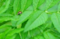 śliczny pająk Fotografia Stock