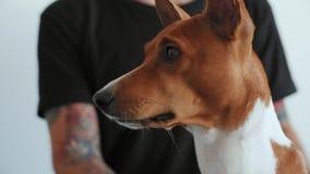 Śliczny piękny pies ziewa na kamerze zbiory