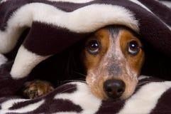 śliczny pies fotografia stock