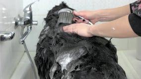 Śliczny pies bierze skąpanie, ręki zbiory wideo