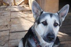 Śliczny pies i mój miłość fotografia royalty free