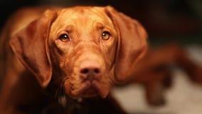 Śliczny pies przy północą czeka jedzenie zbiory wideo