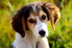 Śliczny przybłąkany pies Obrazy Royalty Free