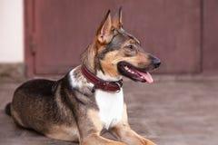 Śliczny przybłąkany pies kłaść przed drzwiowym, ładnym zwierzęcia domowego adotpet od schronienia, obrazy royalty free