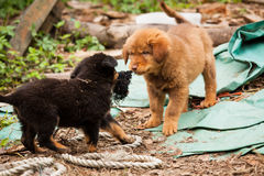 Śliczny przybłąkany szczeniaków bawić się zdjęcie royalty free