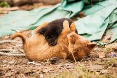 Śliczny przybłąkany szczeniaków bawić się obraz stock