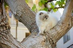 Śliczny przystojny piękny kota odprowadzenie na drzewie Plenerowy domowy zwierzę domowe M fotografia royalty free