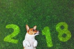 Śliczny psi dźwigarki Russel terier, kłama na zielonej trawie Obraz Stock