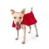 Śliczny Psi Jest ubranym bohatera przylądek fotografia royalty free