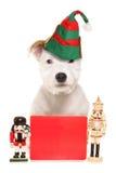 Śliczny psi jest ubranym elfa kapelusz z puste miejsce znakiem Obraz Stock