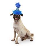 śliczny psi kapeluszu przyjęcia mops target78_0_ potomstwa Fotografia Royalty Free