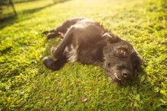 Śliczny psi lying on the beach w trawie Zdjęcie Royalty Free