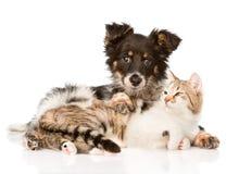 Śliczny psi obejmowanie kot pojedynczy białe tło Zdjęcie Royalty Free
