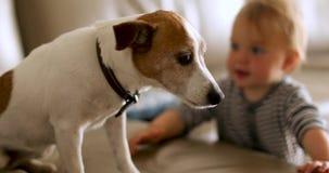 Śliczny psi obsiadanie z dzieciakiem w domu zbiory