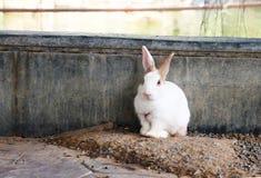 Śliczny relaksujący królik z natury tłem Fotografia Royalty Free