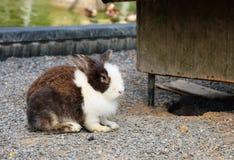 Śliczny relaksujący królik z natury tłem Obrazy Royalty Free