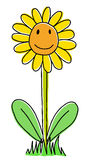 Śliczny słonecznik Zdjęcia Stock
