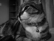 Śliczny spokojny tajemniczy kota zwrota dobro fotografia royalty free