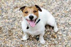 Śliczny szczęśliwy pies z uśmiechniętej twarzy wyrażeniowy przyglądający up Fotografia Stock
