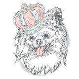 Śliczny szczeniak jest ubranym koronę royalty ilustracja