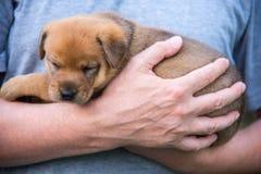 Śliczny szczeniak na jego ręki Fotografia Royalty Free