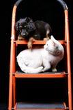 Śliczny szczeniak z białym kotem na falcowanie drabinie Obraz Stock
