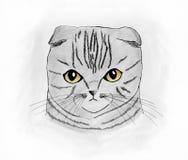Śliczny szkocki fałdu kota portret zdjęcia stock