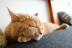 Śliczny tabby kot relaksuje na kanapie zdjęcia royalty free