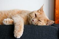 Śliczny tabby kot relaksuje na kanapie zdjęcia stock