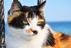 Śliczny tortoiseshell kot zdjęcie royalty free