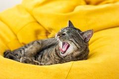 Śliczny tygrysiego kota lying on the beach na jaskrawej żółtej bobowej torbie zdjęcia royalty free