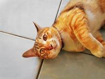 Śliczny Uroczy Imbirowy kota lying on the beach Na Podłogowy Patrzeć Oddolny fotografia royalty free