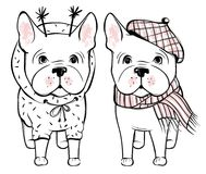 Śliczny wektoru pies w zimie odziewa Moda Francuskiego buldoga szczeniak royalty ilustracja