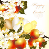 Wielkanocny kartka z pozdrowieniami z jajkami, jabłkami, wiosna kwiatami i kurczątkiem, Fotografia Royalty Free