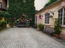 Śliczny wygodny podwórze z flowerpots i zieleni ścianą zdjęcie stock