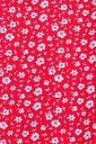 Śliczny wzór w małym białym kwiacie Fotografia Royalty Free