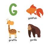 Śliczny zoo abecadło w wektorze G list Śmieszni kreskówek zwierzęta: Goldfish żyrafa, goryl Obrazy Stock