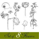 ślicznych kwiatów obrazkowy set ilustracji