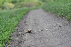 Ślimaczek krzyżuje drogę Obraz Royalty Free