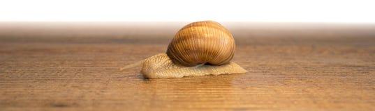 Ślimaczek na drewnianej podłoga zdjęcie stock