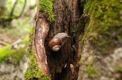 Ślimaczek na drzewie obrazy royalty free