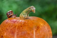 Ślimaczek na Pomarańczowej bani zdjęcia stock