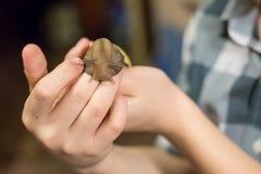 Ślimaczek na rękach Obraz Stock