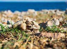 Ślimaczek na skale na ziemi fotografia stock
