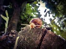 Ślimaczek na wierzchołku zdjęcie stock