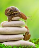 Ślimaczek na wierzchołku stos otoczaki zachęca swój partnera Obrazy Royalty Free